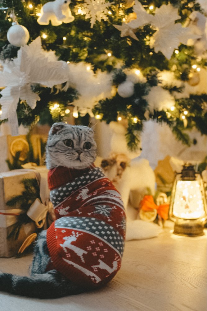 Cute Sweater for Cats